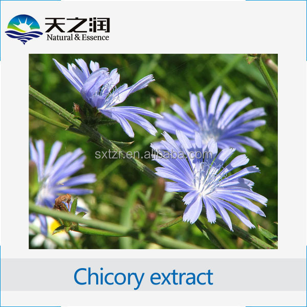 Best Selling High Quality chicory extract, Anti-virus Chicory Acid echinacea angustifolia extract powder