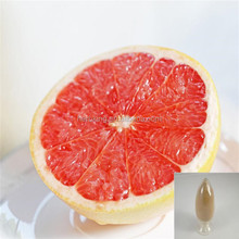 Factory supply grapefruit seed extract