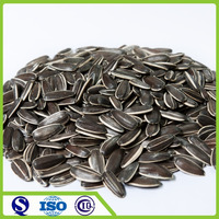 2015 new crop 5009 type sunflower seed