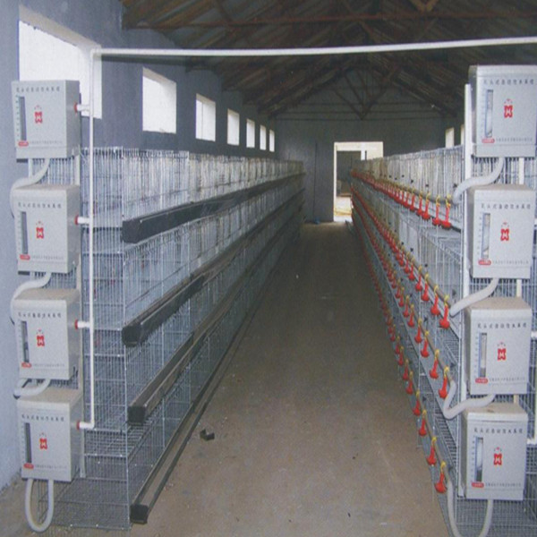 poultry farm equipment quail battery cage