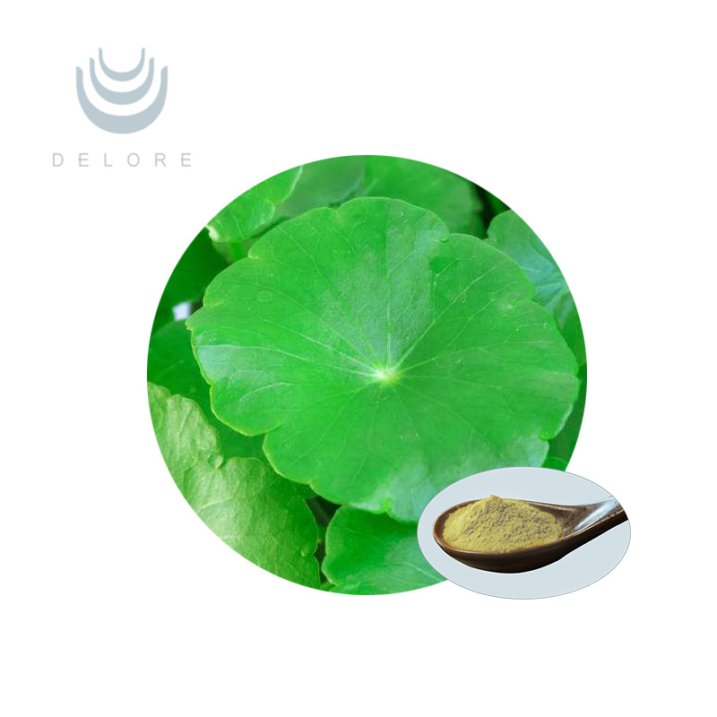 Bulk Supply ISO&Kosher Hydrocotyle asiatica extract/Centella Asiatica