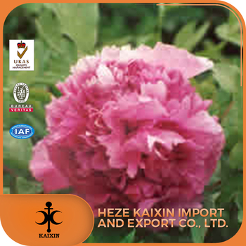 Multi - branched red herb extract white peony root