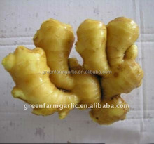 china supplier new 2016 indonesian fresh ginger