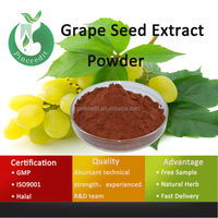 Grape Seed Extract /Grape Leaves/Grape Seed Extract 95%