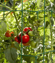 Square Folding Tomato Cages