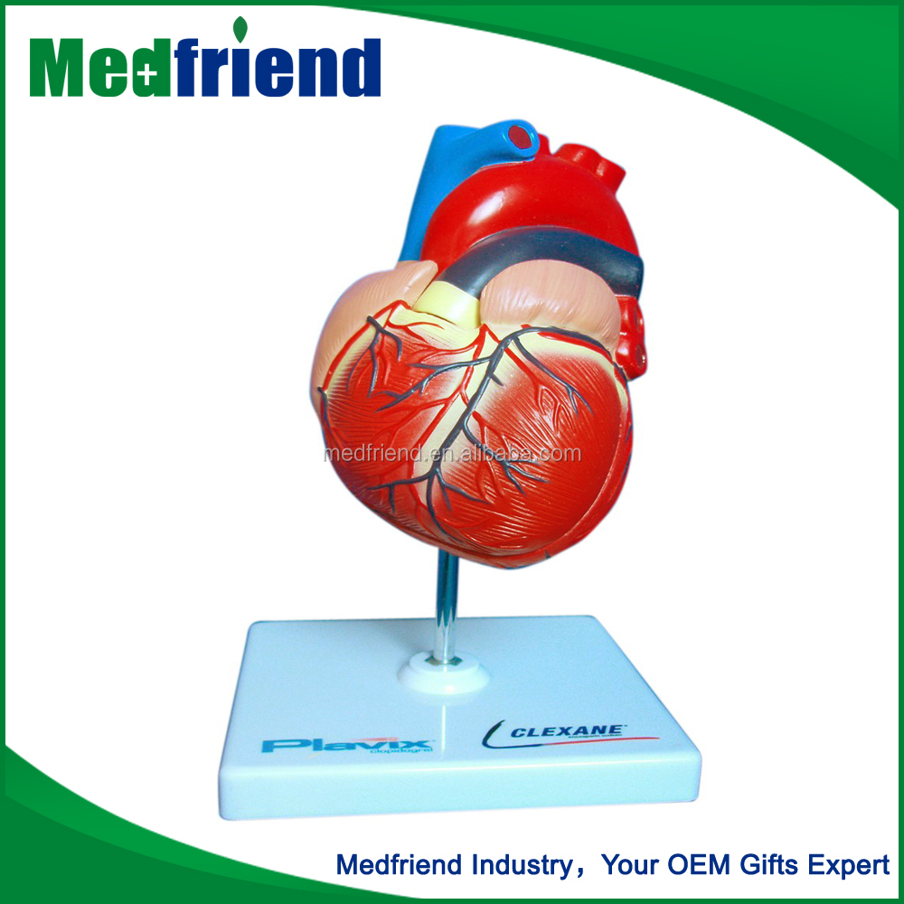 MFM014 Alibaba China Wholesale Medical Plastic Heart Model