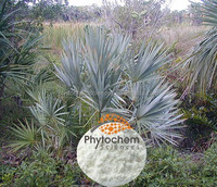 saw palmetto fruit extract for medicine and health food