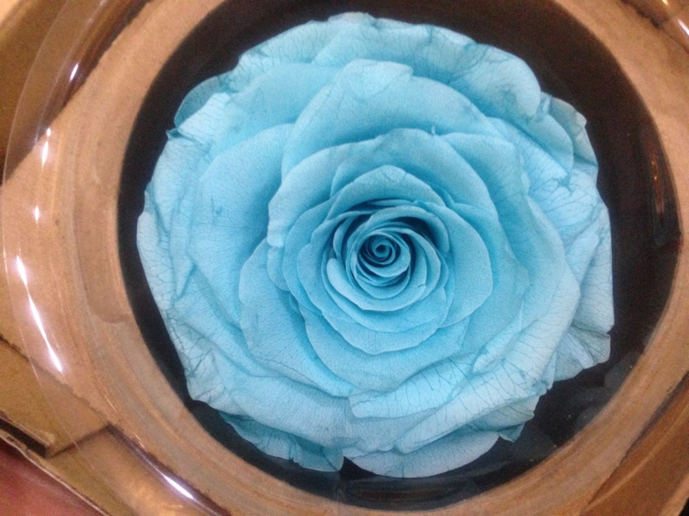 Clean preserved Flowers preserved Roses 2016 Kunming preserved Flowers preserved Roses Wholesale Price long lasting