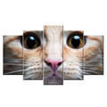 Animal Wall Pictures 5 Panel Eye of Little Cat The kitten Custom Canvas Prints for Wholesales