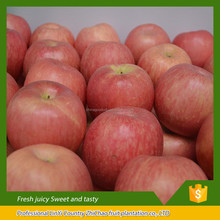 china fresh fruits red delicious fuji apples