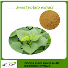 Health benefits products Organic bulk sweet potato extract powder sweet potato leaves extract 10:1
