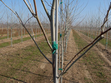 Fiberglass Plant and Tree Stakes