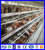 H type automatic poultry farm equipments/chicken layer cage/chicken poultry battery cage