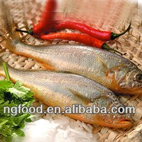 Frozen seafood yellow croaker