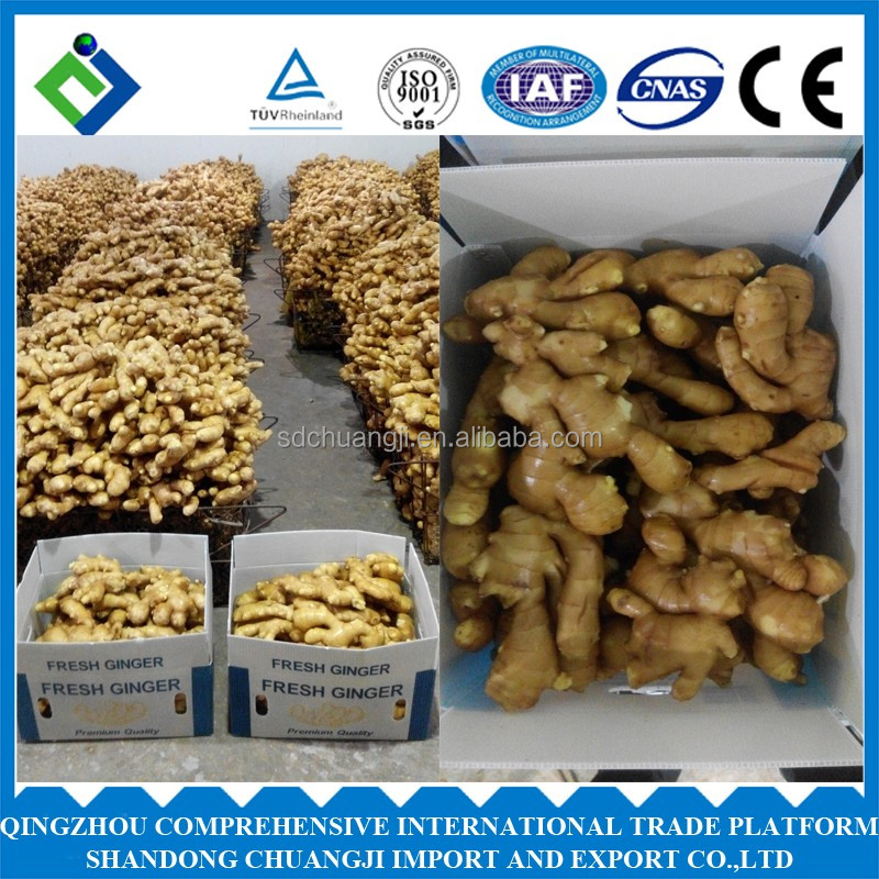 Fresh style Chinese ginger for sale