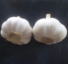 New natural normal white garlic fresh purple garlic China normal garlic