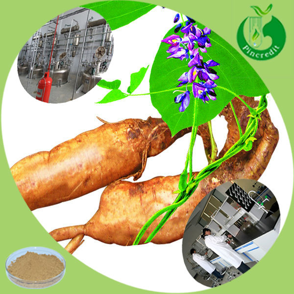 GMP factory supplly natural Kudzu root Extract