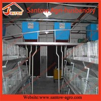 good quality new poultry feeding system for egg production in South America