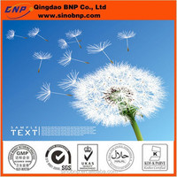 GMP&Kosher BNP Dandelion Root Extract