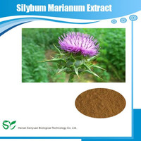 Milk Thistle Extract / Silybum Marianum /Milk Thistle Powder
