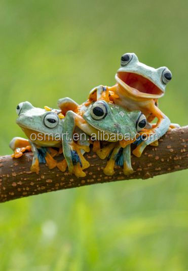 A cute frog family on the branch play very happy and in the green landscape oil painting in canvas