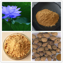 10:1 Blue Lotus Leaf Extract Powder