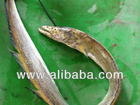 Ribbon Fish (Yellow)