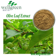 Natural Olive Leaf Extract powder and Mint Extract 15%-98%