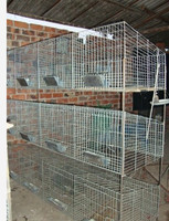 Factory Supply best quality industrial rabbit cages/cages used for rabbit HJ-RC12