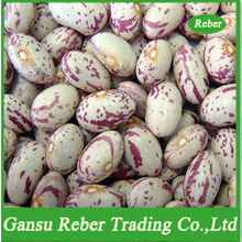 Light Speckled Kidney Beans Round Shape