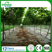 OEM excellent quality low price uv protected pe agricultural ground cover greenhouse plastic white transparent film