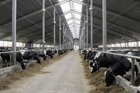 Consultant for Commercial Dairy Farm