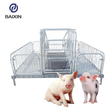 High Professional Process Sow Farrowing Crate for Pigs