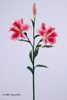 88 cm PVC Real Touch Tiger Lily Spray Artificial Flower