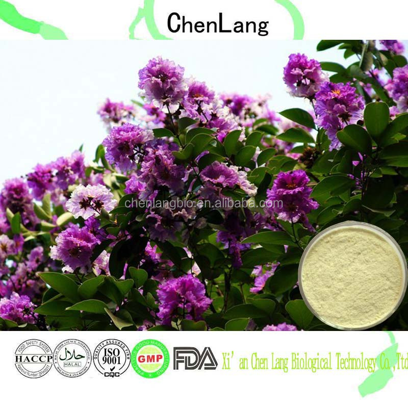 Chinese Natural Herbal Medicine Corosolic Acid of Banaba Leaf Extract Powder