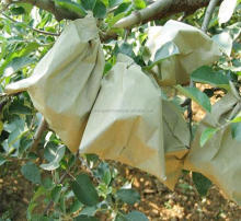China supplier black fruit growing paper bag grapefruit mango banana made of hig grade paper