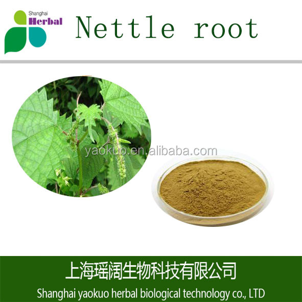ISO 98% pure natural extract Nettle root with best quality