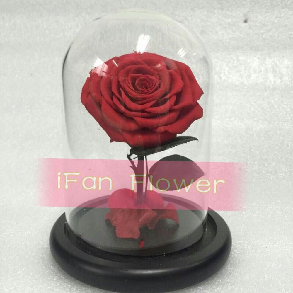 China Manufacturer Ifan 100 Preserved Roses Wholesale Preserved