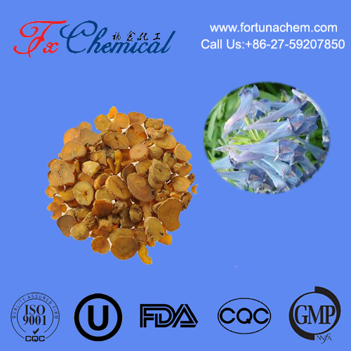 Pure natural corydalis yanhusuo W.T.Wang / corydalis powder extract with high quality low price