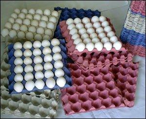 9624-egg-360-eggs-carton-box-55-grams-weight-1.jpg