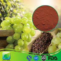 Factory Supply Grape Seed P.E. with High Quality