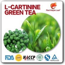 Bulk Wholesale Slim Fit Weight loss 500mg L-carnitine Green Tea Capsules