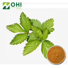 Mulberry Leaf Extract/mulberry seeds/1% DNJ