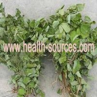 Epimedium grandiflorum P.E. for treating the renal and impotence effectively