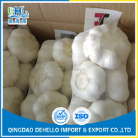 Fresh garlic with good taste and strong flavor for Customers in Malaysia market