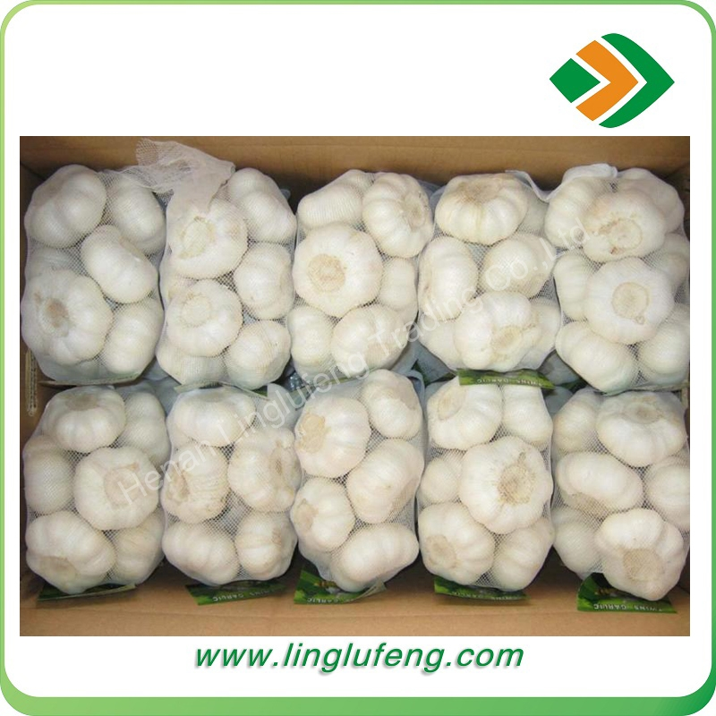 4.5cm 5.0cm 5.5cm 6.0cm normal white garlic with Refrigerated transport