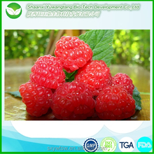 raspberry extract/raspberry ketone api/extracts