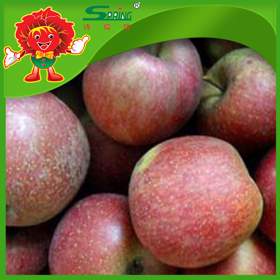 best fresh apple fruit cheap wholesale price