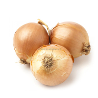 2015Chinese price of yellow onion for importer in Dubai