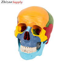 advanced pvc Skull Separation Model